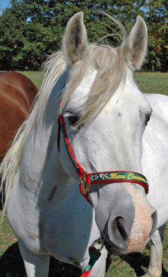 Christmas Horse Pictures.Monogrammed Horse Halter Christmas Halter