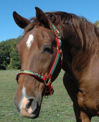 Christmas Horse Tack.Monogrammed Horse Halter Christmas Halter