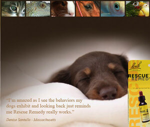 Rescue Remedy For Pets Furry Travelers Pet Supplies